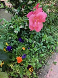 Incontro nel giardino della Casa a cura delle giardiniere del Gruppo Spazi @ Casa delle Donne di Milano